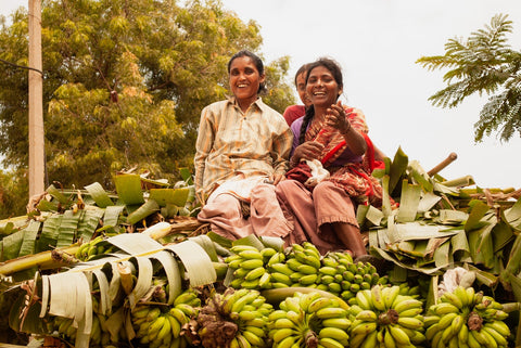 women on top of harvested bananas