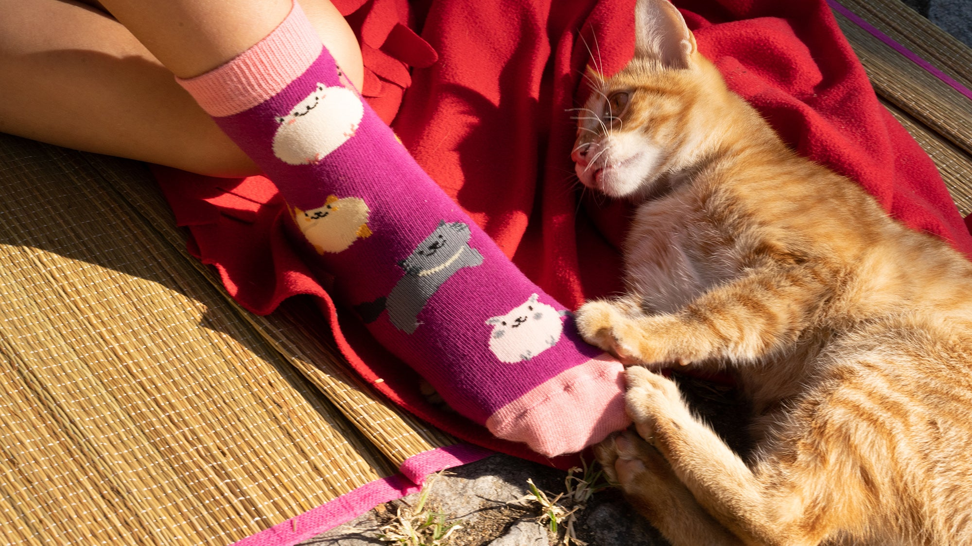 Kids Cute Cats Socks 5-Pack