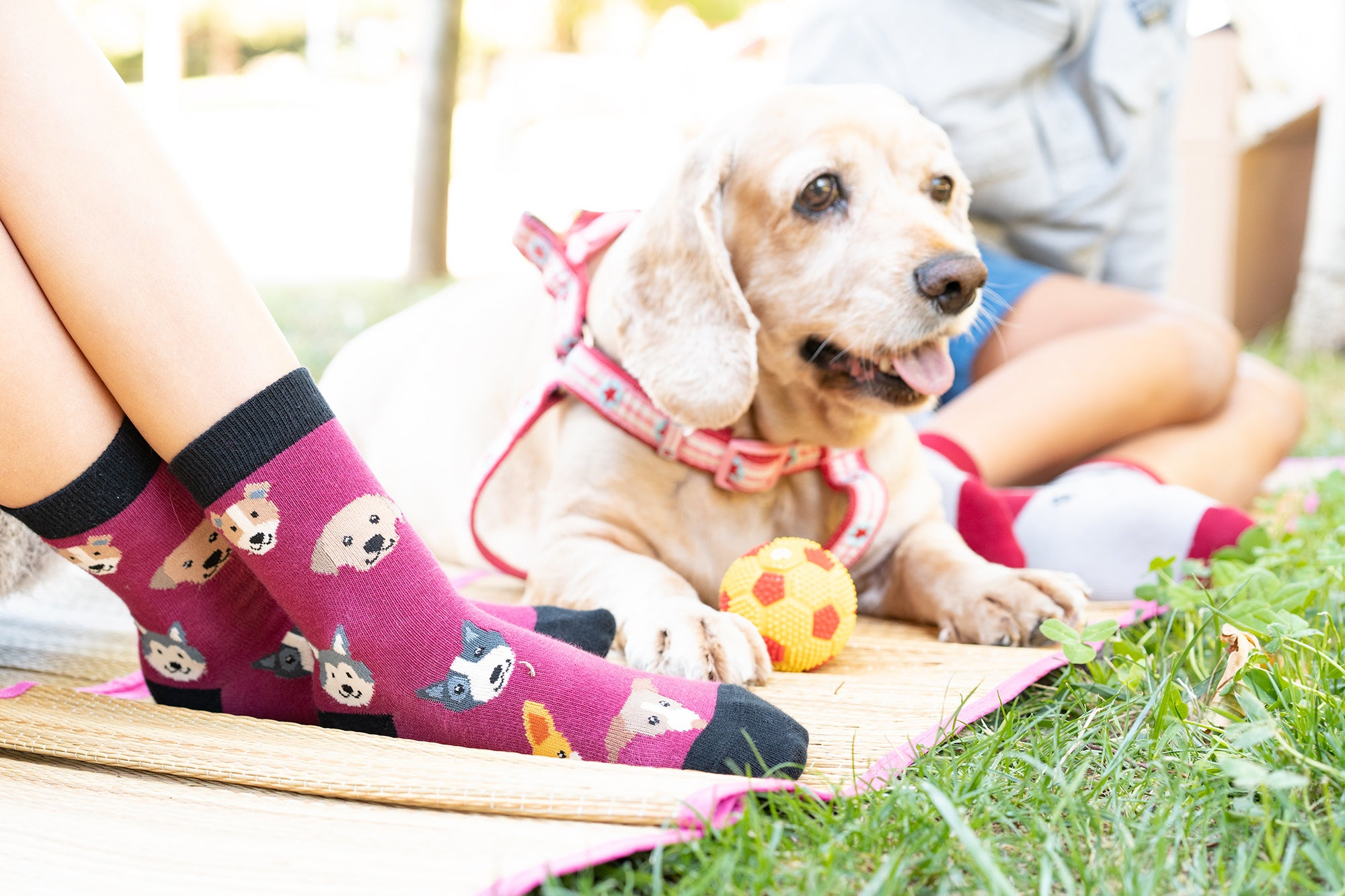 Kids Cute Dogs Socks