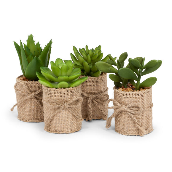Mini Succulents in Burlap