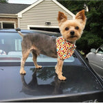 Fall leaves and acorns Bandana - Paws N Claws Couture