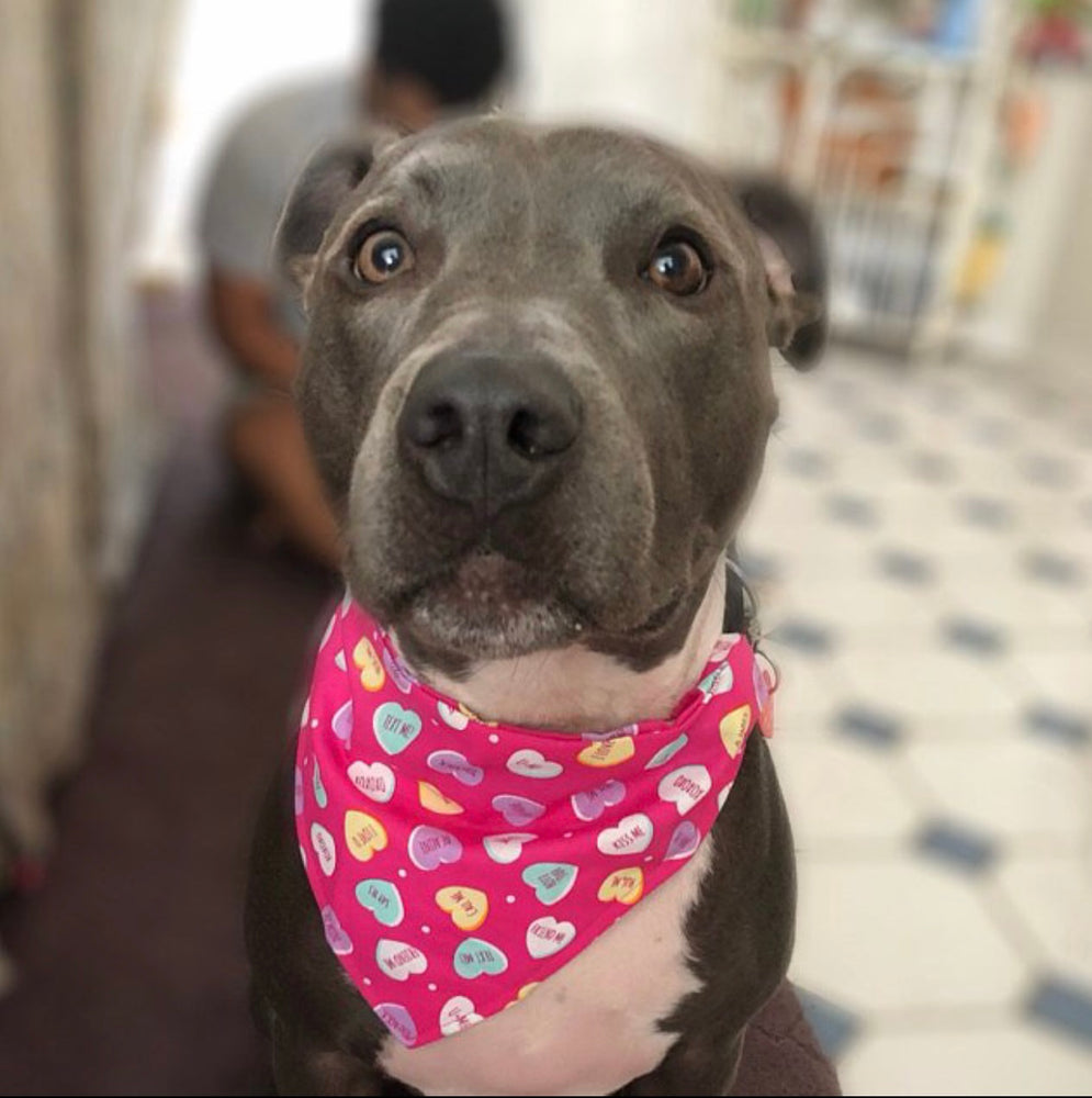 Candy Hearts Bandana - Paws N Claws Couture