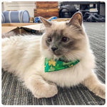 Clover Patch Bandana - Paws N Claws Couture