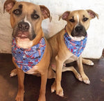 Country 4th of July Bandana - Paws N Claws Couture