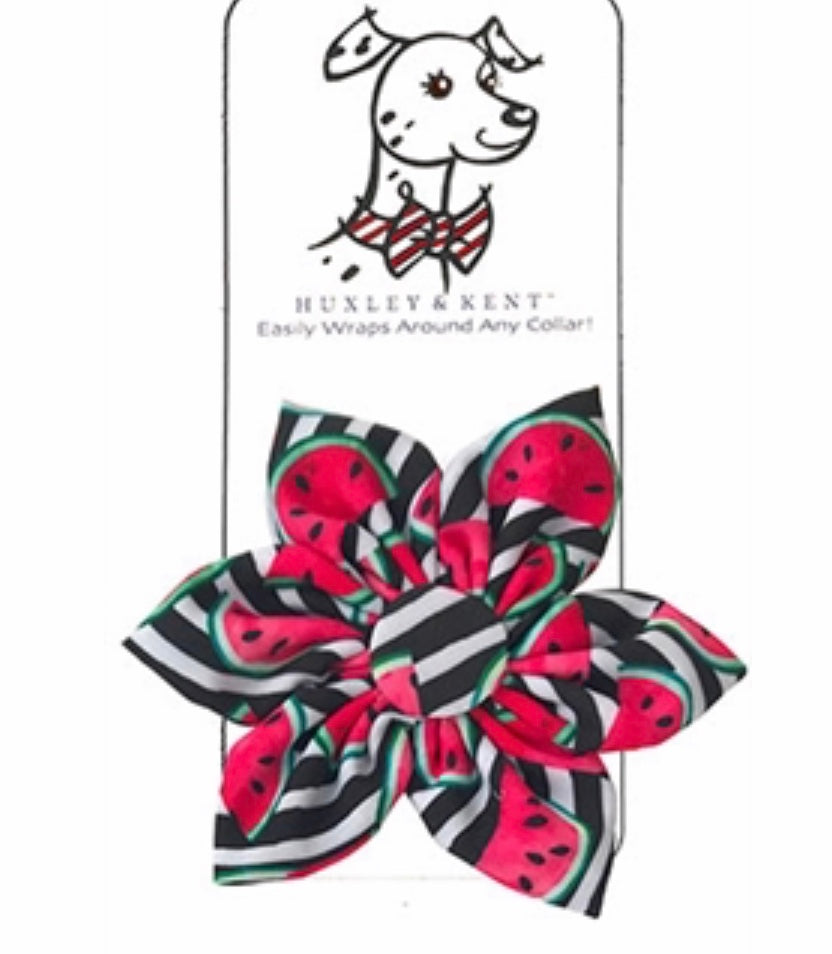 Watermelon Pinwheel - Paws N Claws Couture