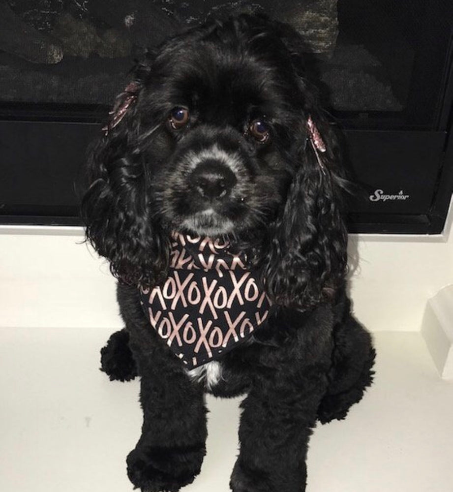 Reversible Metallic XOXO & Hearts on Black Bandana - Paws N Claws Couture