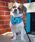 Sea turtle Bandana
