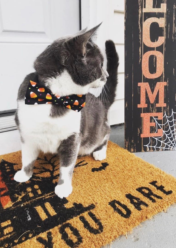 Bats or candy corn Bow Ties - Paws N Claws Couture
