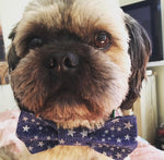4th of July Summer Bow Ties - Paws N Claws Couture