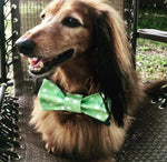 Tiki hut or Palm Trees Bow Ties - Paws N Claws Couture