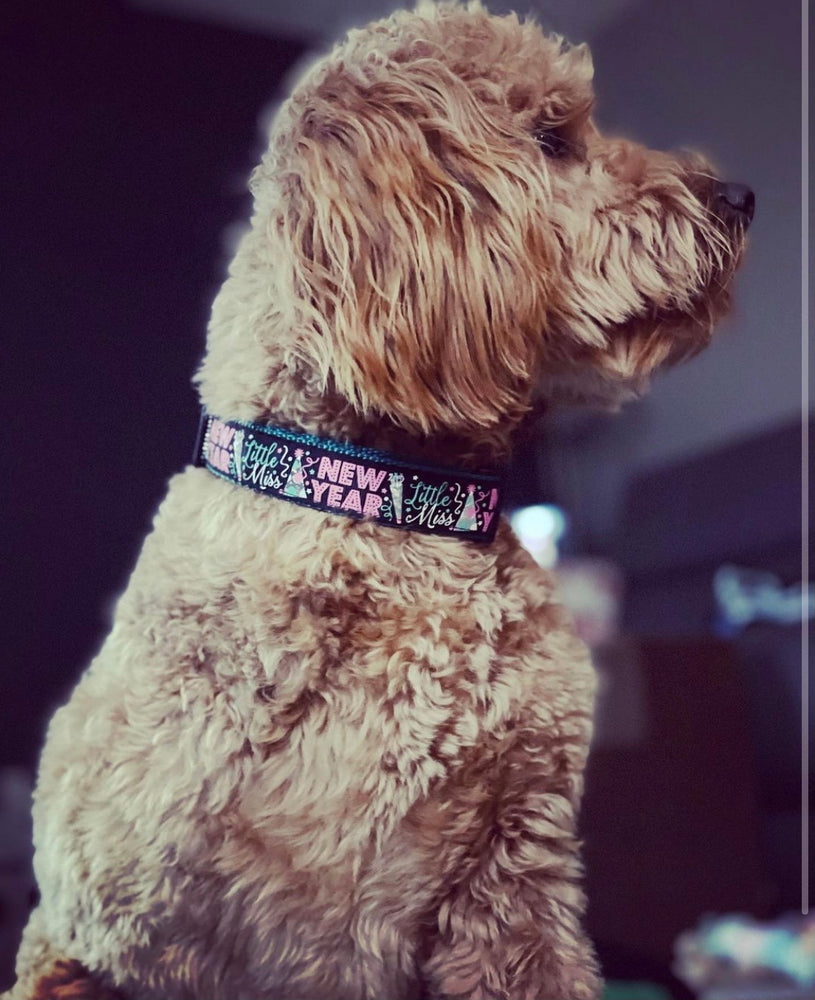 "1"" Confetti or Little Miss New Year Dog Collar"