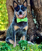 Clovers and Gold Dots Bow Tie - Paws N Claws Couture