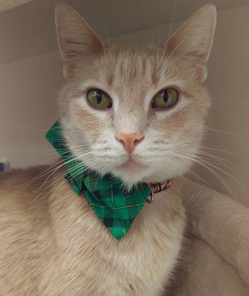 Green Plaid Bow Tie - Paws N Claws Couture