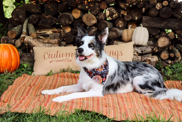 Reversible Plaid and Pumpkin Spice Bandana - Paws N Claws Couture