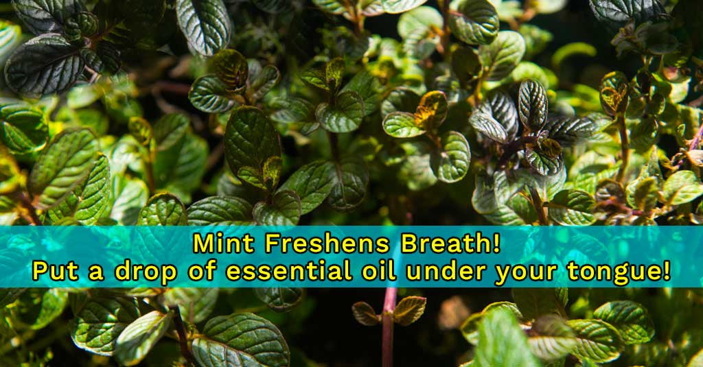 The Powers of Mint!
