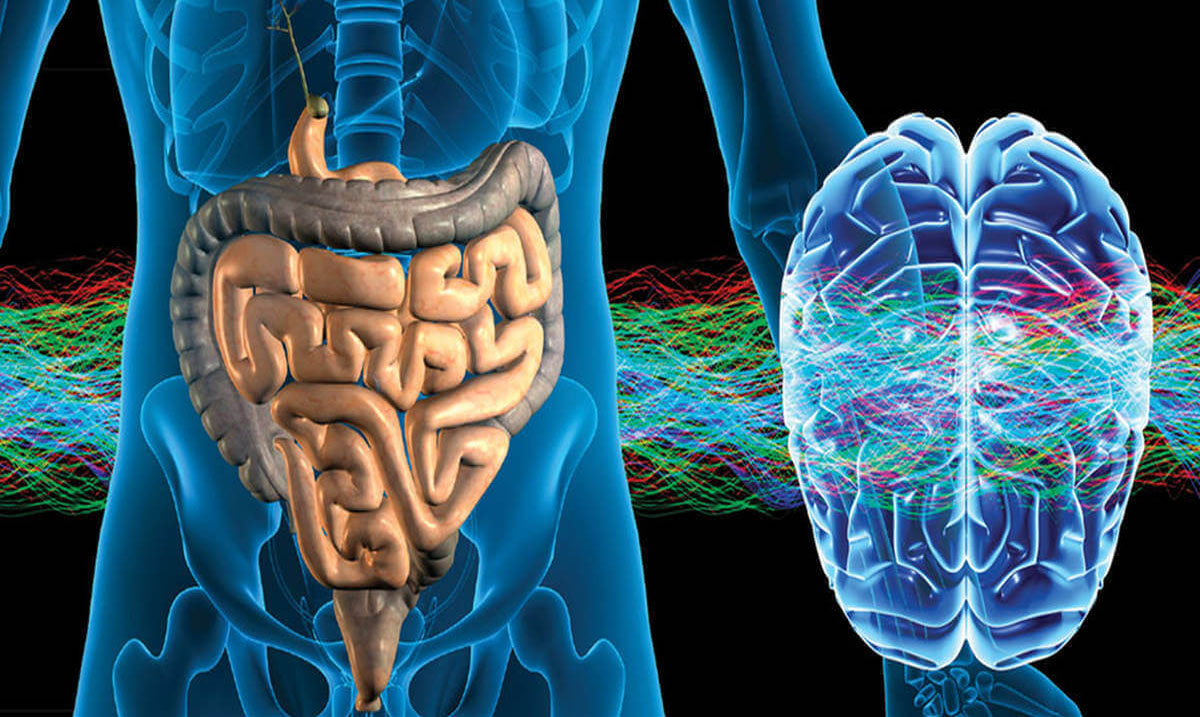 The New Frontier in Medicine - How Psychobiotics and the Gut Regulate Mood