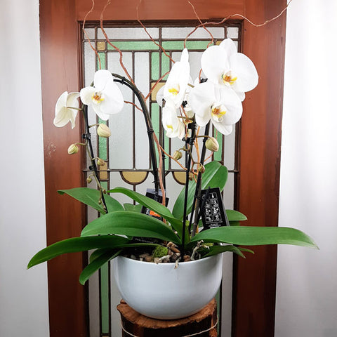 Custom Design  Planter Garden - 5 (Triple Orchids)