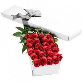 Two Dozen Boxed Red Roses (Multiple Colors Available)