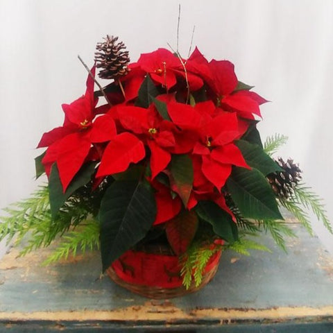 Decorated Poinsettia Basket
