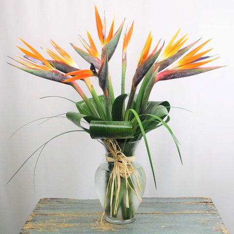Birds of Paradise ( one dozen birds of paradise )