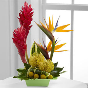 Arrangement - The Exotica™ Arrangement J-C21-4873