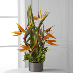 Arrangement - The Tropical Bright™ Arrangement J-C21-4874