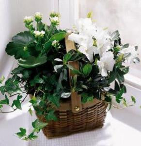 Basket - The White Assortment Basket J-C29-2960