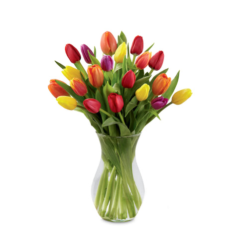 The Bright Spring Bouquet (Two dozen  fresh cut tulips)