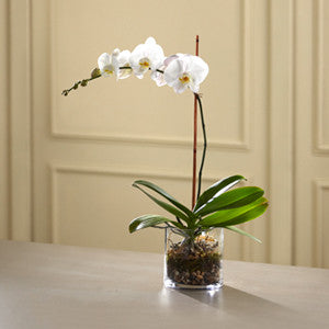 Planter - The White Orchid Planter J-S6-4986