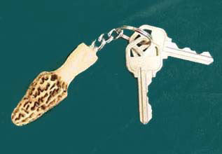 Morel Key Ring