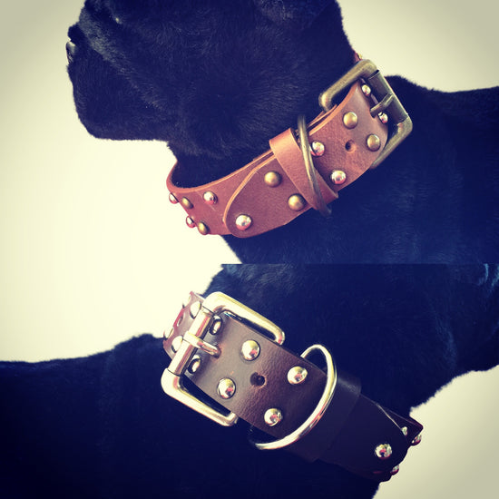 Studded Design Tan Dog Collar