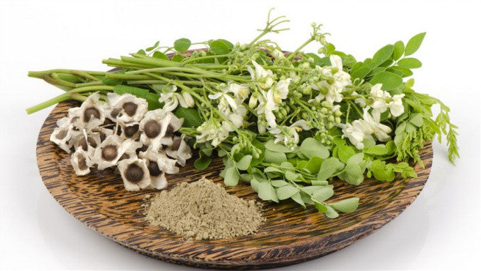 Moringa Oleifera the Health Booster