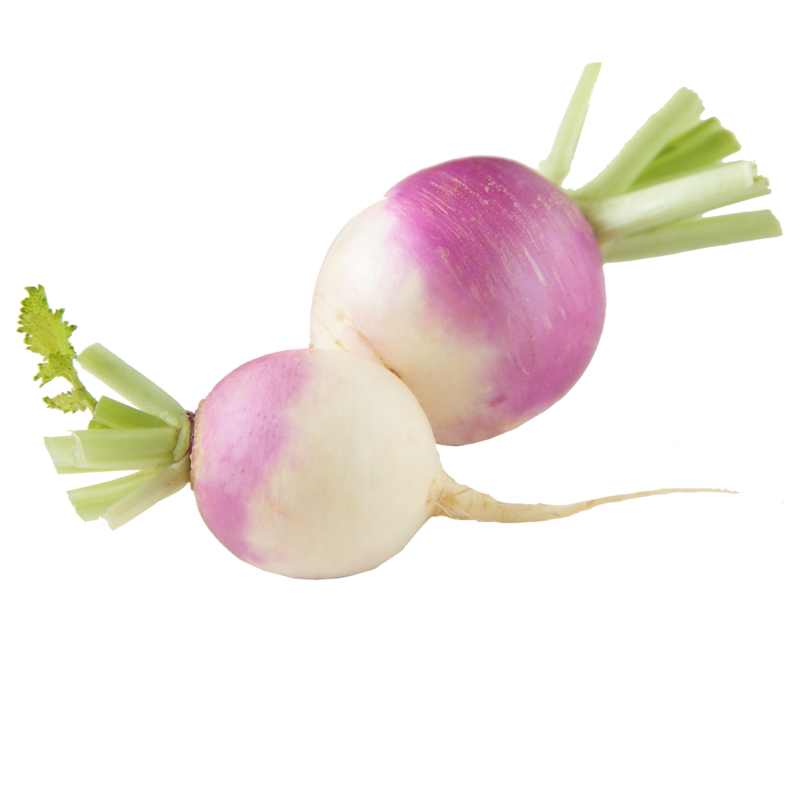 Turnip, [product-type] - fresh from Growing Healthy Foods