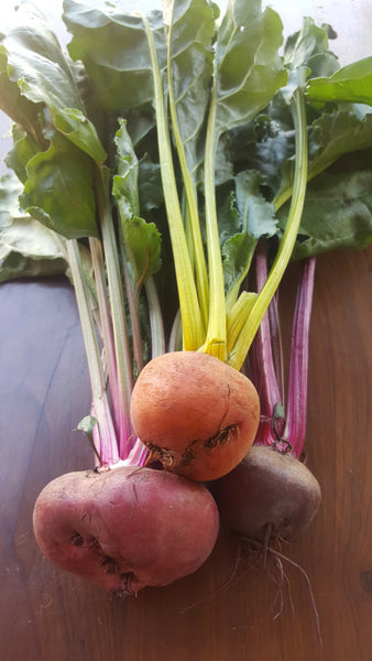 Beetroots Mixed Colours, [product-type] - fresh from Growing Healthy Foods