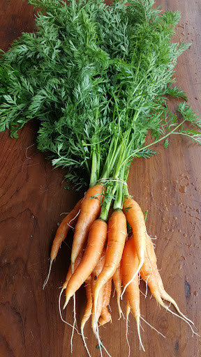 Carrots, [product-type] - fresh from Growing Healthy Foods