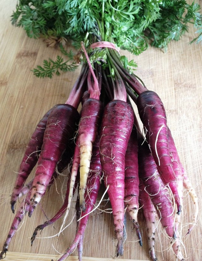 Carrots Purple Dragon, [product-type] - fresh from Growing Healthy Foods