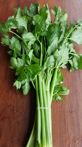 Celery, [product-type] - fresh from Growing Healthy Foods