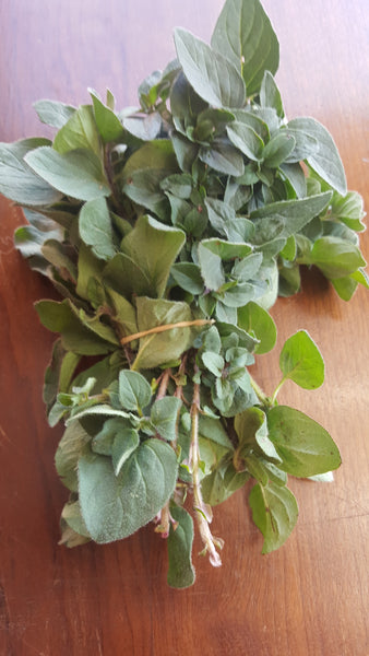 Oregano /50g, [product-type] - fresh from Growing Healthy Foods