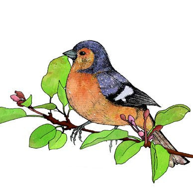 Chaffinch on a Cherry Branch Greetings Card 14x14cm (blank inside) - On the Wall Art Print Posters & Gifts