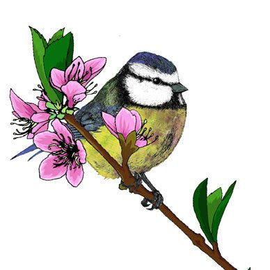 Blue Tit and Cherry Blossom Greetings Card 14x14cm (blank inside) - On the Wall Art Print Posters & Gifts