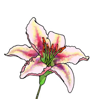 Lilium Speciosum Greetings Card 14x14cm (blank inside) - On the Wall Art Print Posters & Gifts