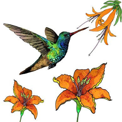 Broad-Billed Humming Bird with Orange Flowers Greetings Card 14x14cm (blank inside) - On the Wall Art Print Posters & Gifts