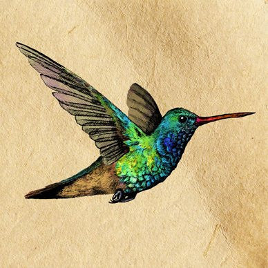 Broad-Billed Humming Bird Greetings Card 14x14cm (blank inside) - On the Wall Art Print Posters & Gifts