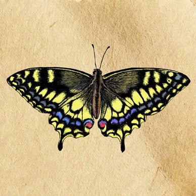 Swallowtail Greetings Card 14x14cm (blank inside)