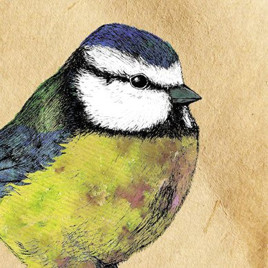 Blue Tit Greetings Card 14x14cm (blank inside) - On the Wall Art Print Posters & Gifts
