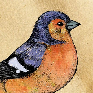 Chaffinch Greetings Card 14x14cm (blank inside) - On the Wall Art Print Posters & Gifts
