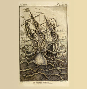 Kraken Natural History 14x14cm Greetings card (Blank Inside)
