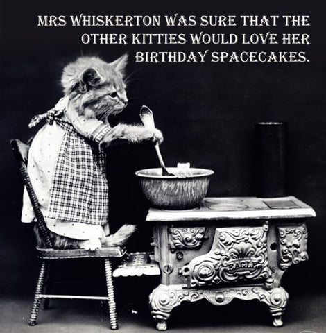 Spacecake Cat Vinatge Comedy 14x14cm Greetings card (Blank Inside)