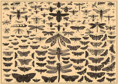 Brockhaus and Efron Butterflies, Illustrated Natural History, Field Studies, Vintage insects Art Print Poster 50x70cm
