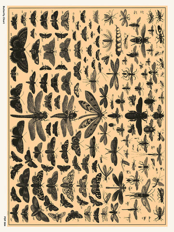 Butterfly Chart Natural History 30x40cm Art Poster Print
